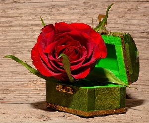 roses gifts